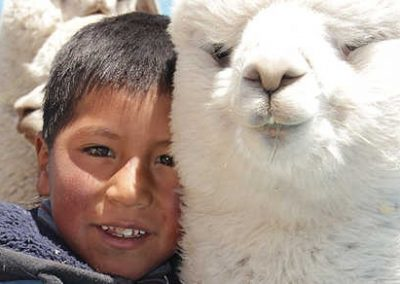 Llamas for Bolivia-inPuncto social engagement