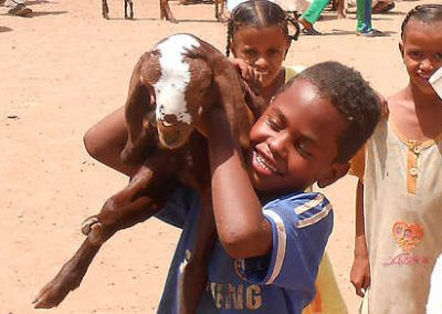Sheep project in Sudan-inPuncto social commitment
