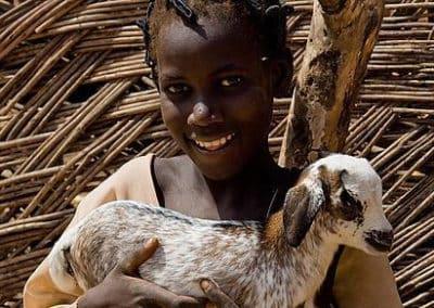 Schafe für Familien im Benin
