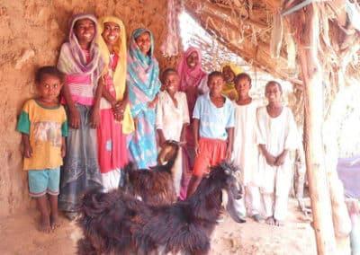 Ziegen für Familien in Sudan